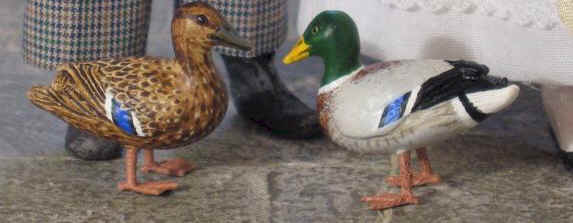 A close up of a pairs of mallard ducks  - a duck and drake.